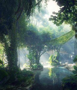 rainforest 33