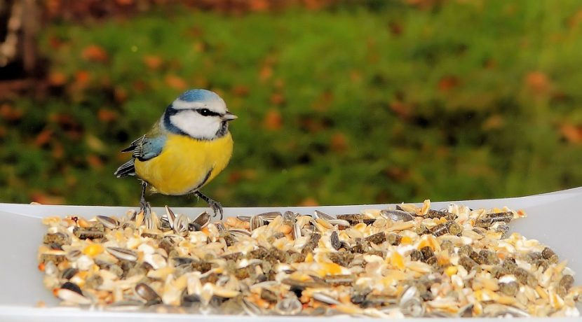 Invite winter birds to your apartment or yard by filling feeders with the best birdseed blends.